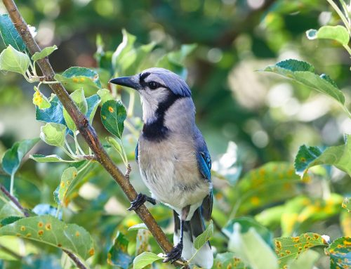 Ten Tips for Getting Started with Backyard Bird Watching