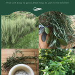Four images of garden fresh herbs