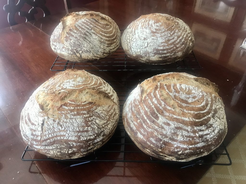 Round loaves of sourdough bread baked using this guide