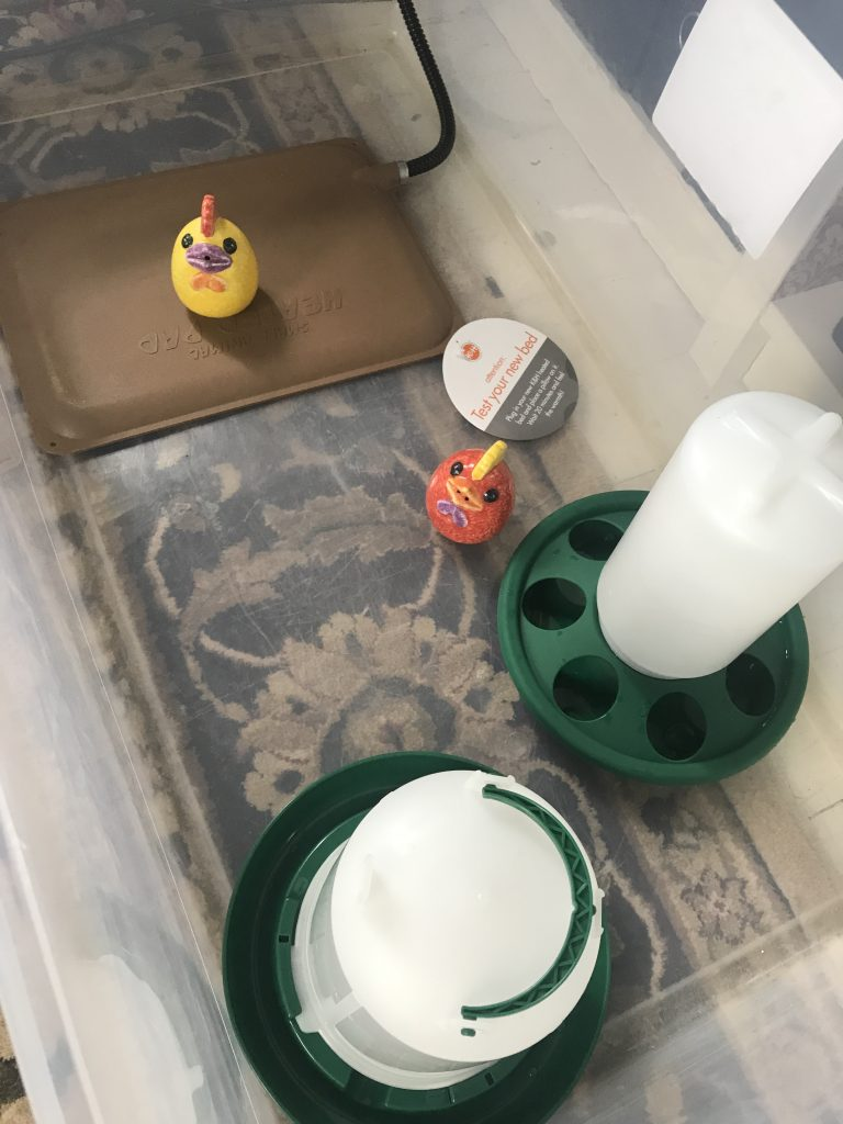 The plastic brooder bin with ceramic chickens inside