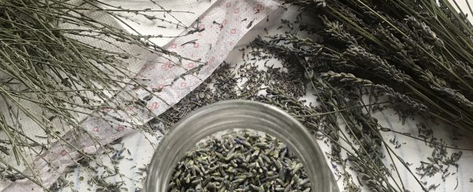 lavender stalks, a jar of lavender flowers and lavender blossoms