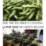 pics of raw green beans and jars of canned beans