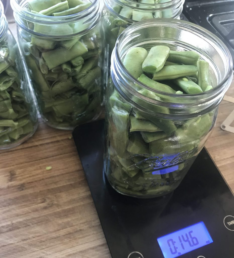 raw beans in a jaw before canning