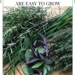 culinary herbs that are easy to grow