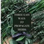 How to propagate perennial herbs