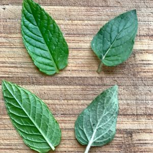 spearmint and peppermint leaves